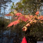 Fall Color on Smiths Creek in Chesapeake