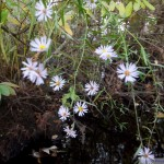 Flowers on Smiths Creek
